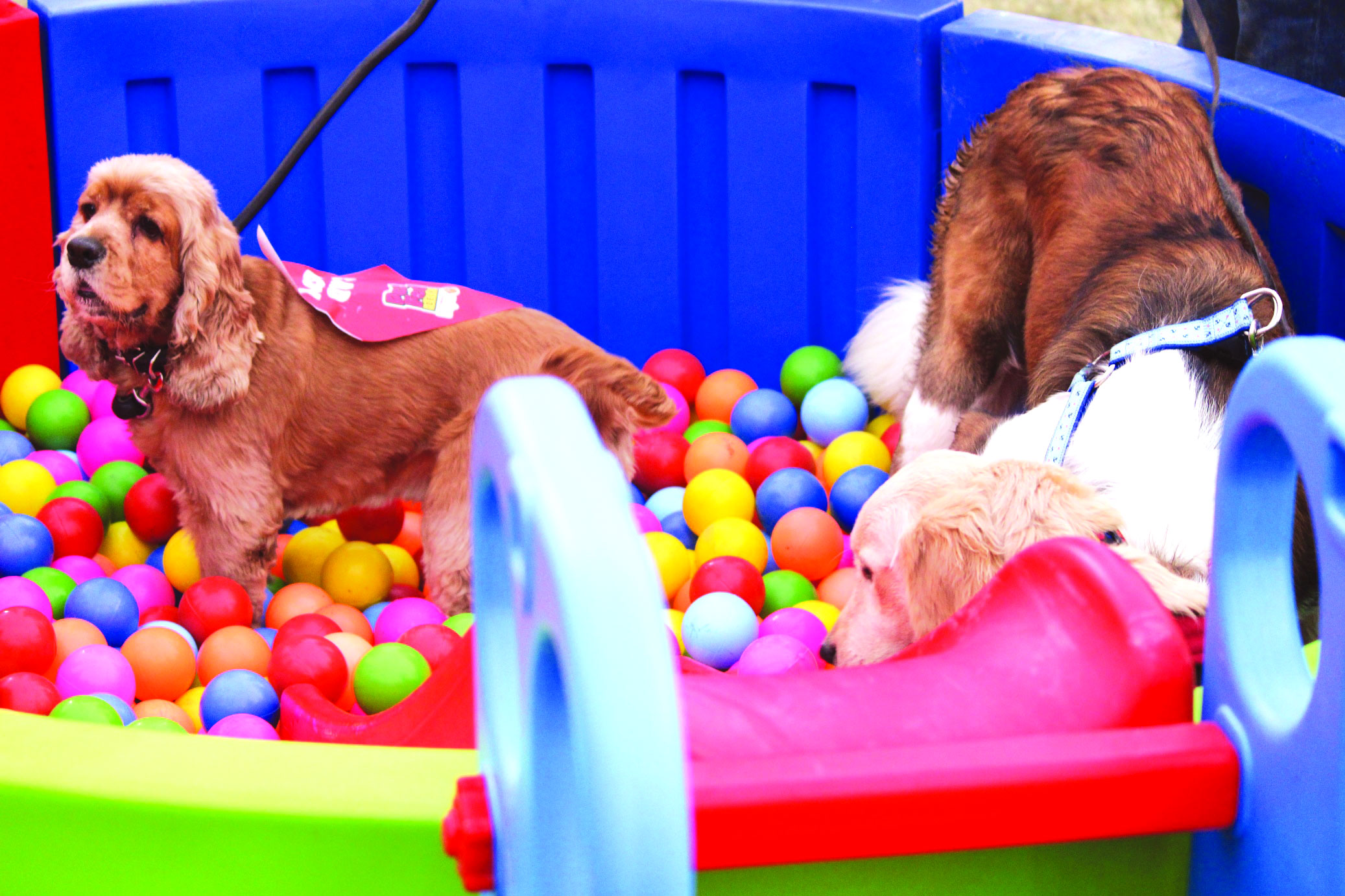 Pets steal the show at biggest fest