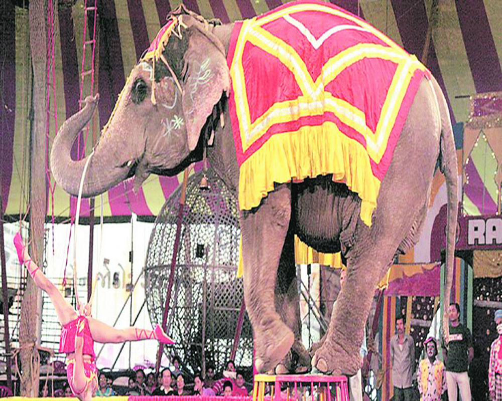 Ban animals in circuses