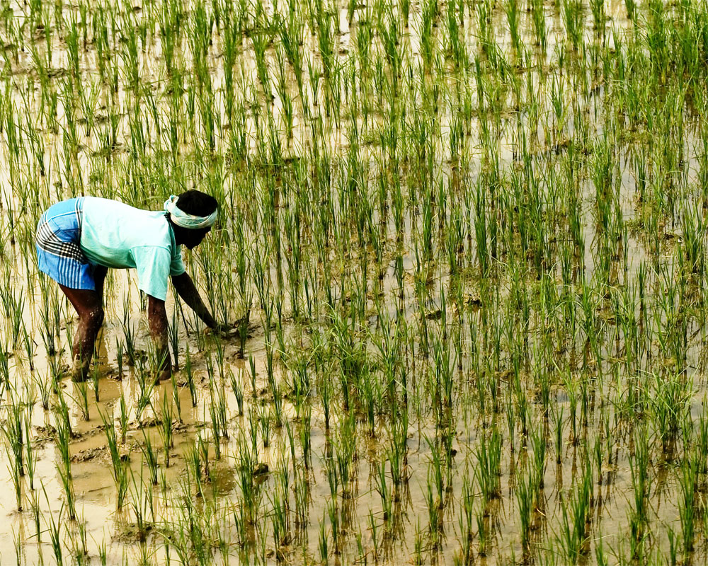 Indian makes pitch to export rice to China; urges it to open up its USD 2 bn rice market