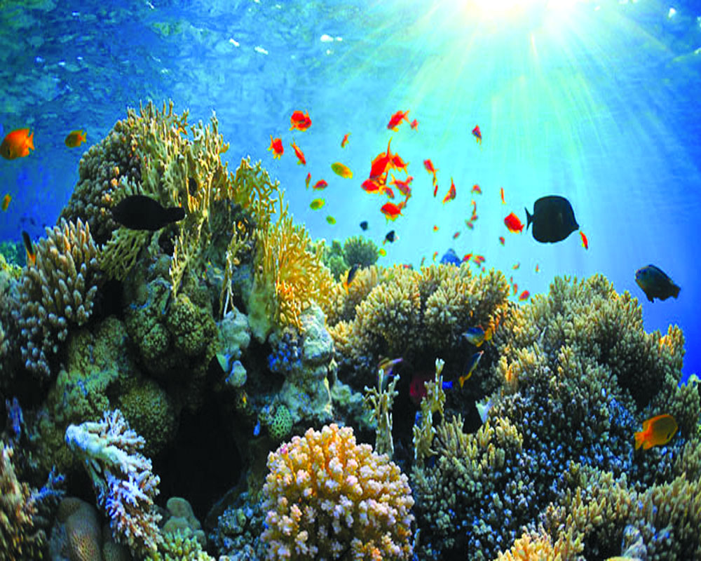Will submarine optic cable imperil coral reef?