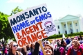Monsanto pigeons come home to roost