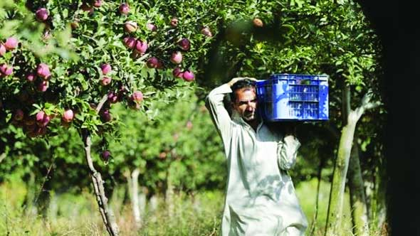 Centre to procure apples from J&K farmers directly