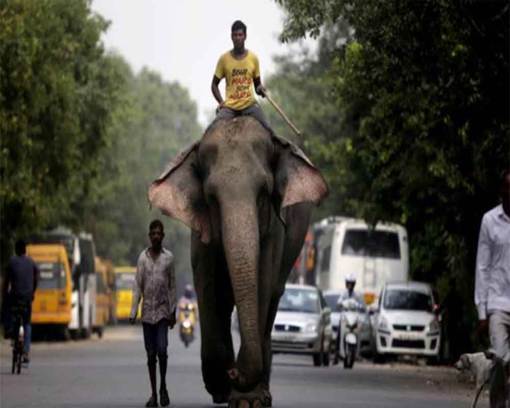 Delhi: Missing elephant, Laxmi, found after two months; mahout detained