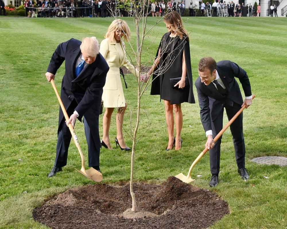 Let's tree again: Macron offers Trump replacement 'friendship' oak
