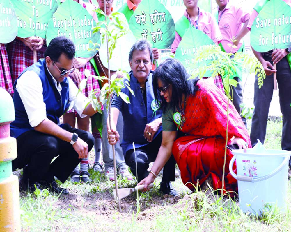 Tree plantation campaigns around the city