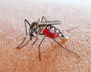 Climate warming may increase malaria risk in colder regions
