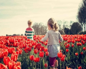 Flower pesticides linked to high BP in kids: Study