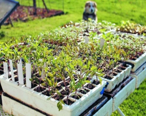 Give your seedlings some tough love