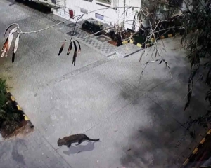 Leopard spotted at Thane shopping mall caught after 6 hrs