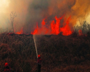 Planet's lungs face threat from inferno