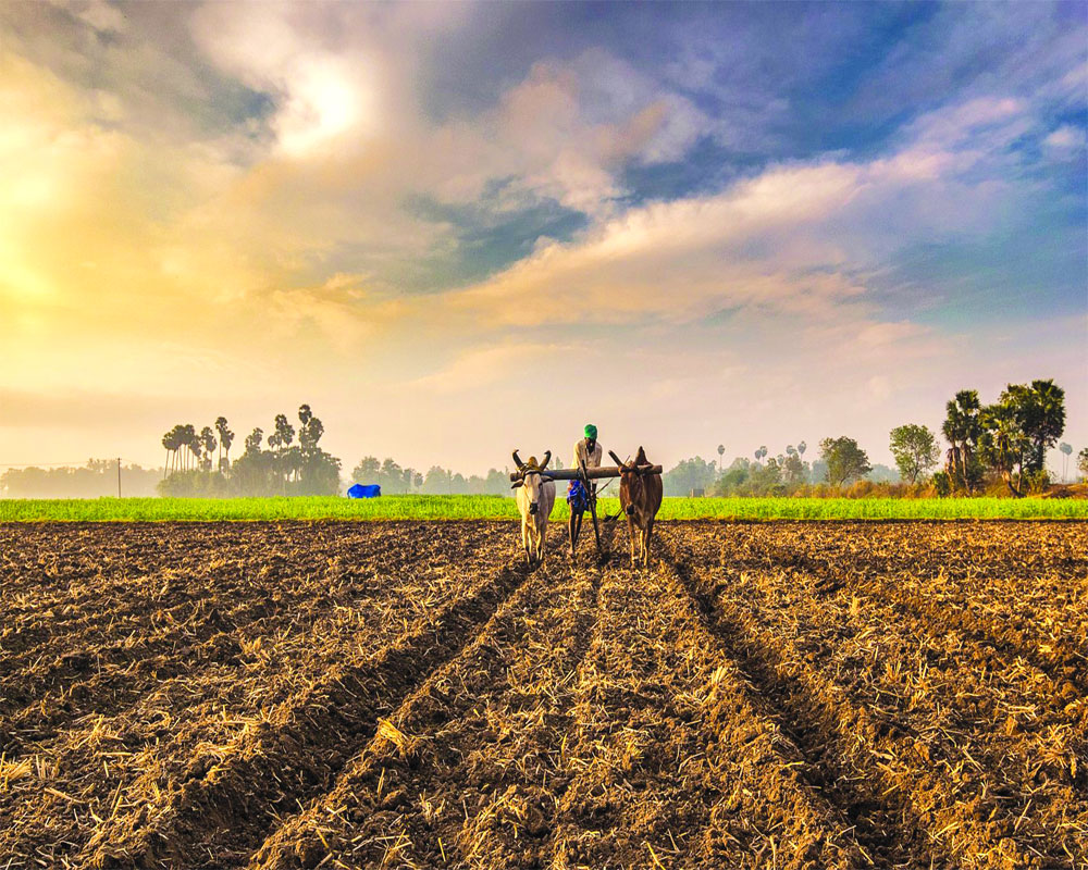 Farm reforms for realising its full potential