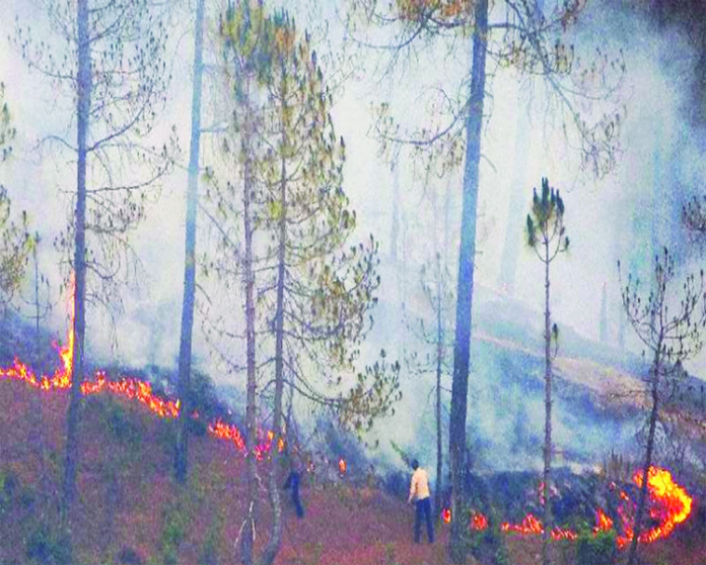 Forests in flames
