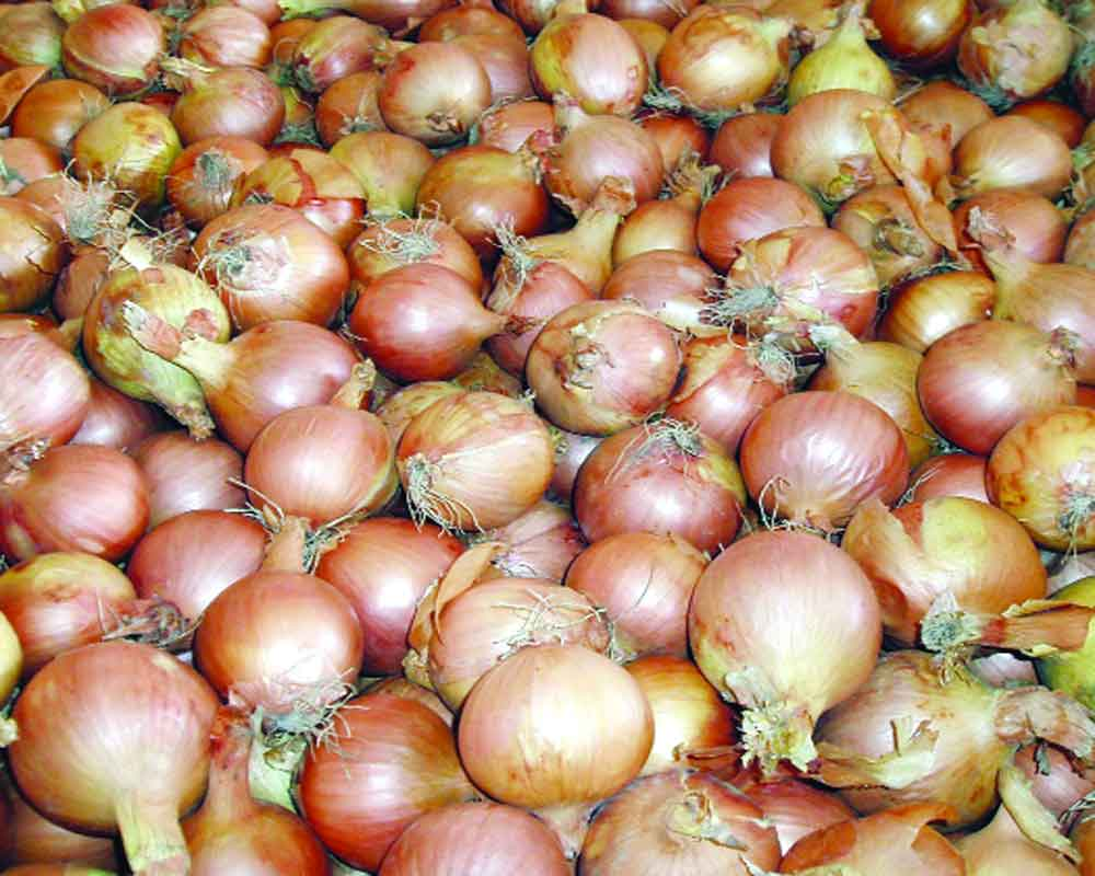 Imported onions tear Govt up