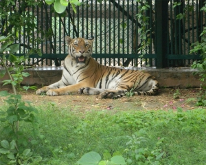 Zoos asked to remain on high alert; collect samples for COVID-19 testing