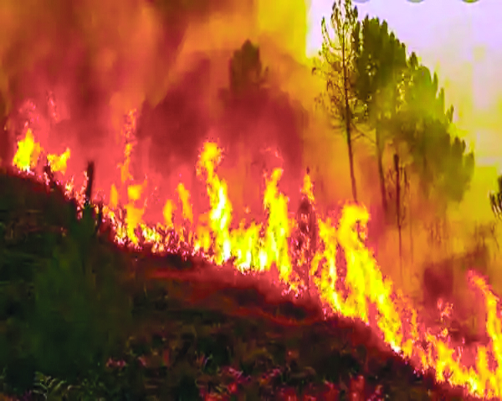 India's flaming forests play havoc