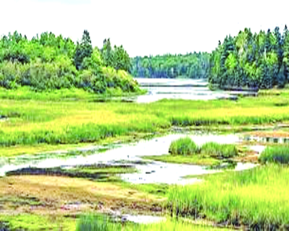 The disappearing wetlands of India