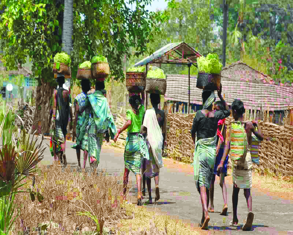 The lost cause of  ingenuous tribals