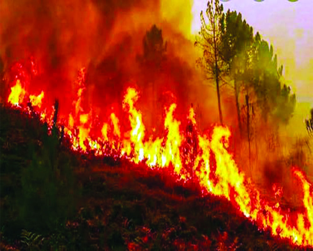 The Scourge of Forest Fires