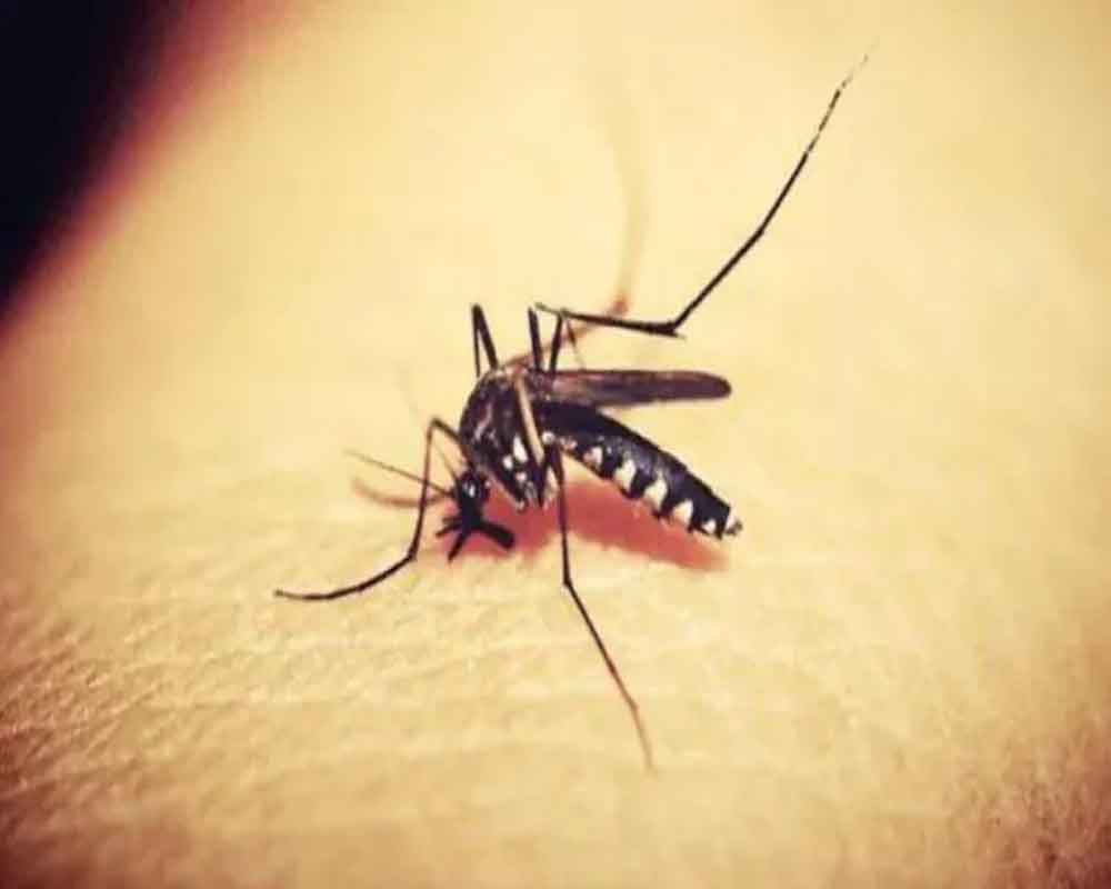 Three more test positive for Zika in Kerala, total reported cases 41: state Health Minister