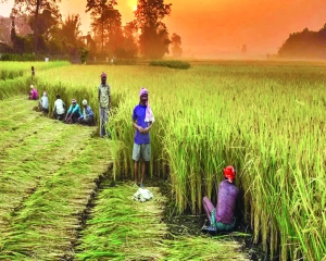 Mighty challenges  in Indian agriculture