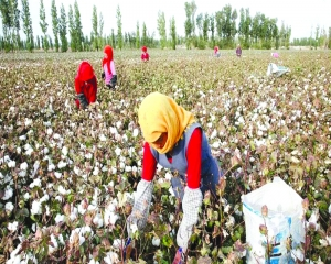World cottons on to forced labour in China