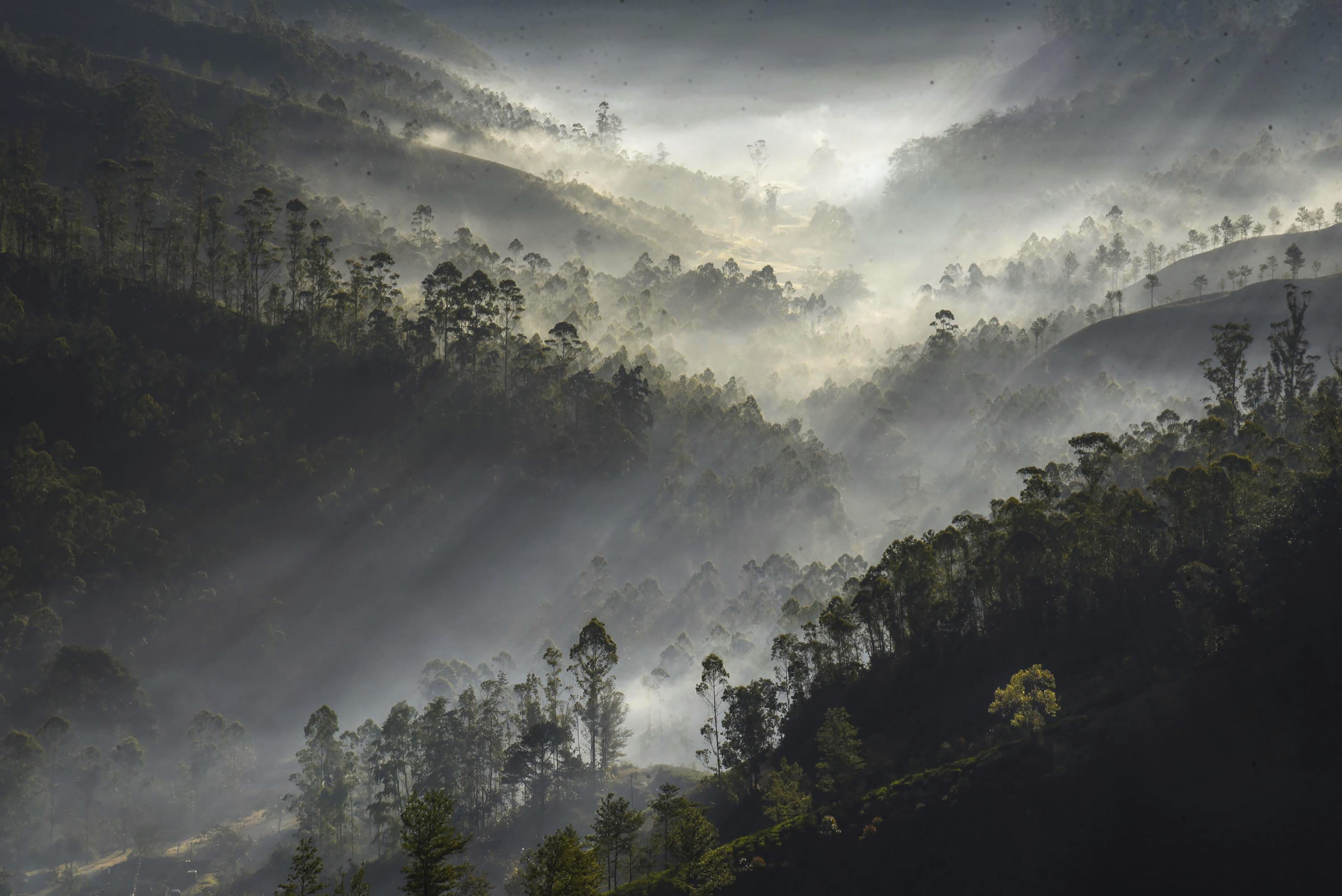 Sun rays filtered view of mountains amidst thick fog seen on a cold, winter morning, in Munnar -