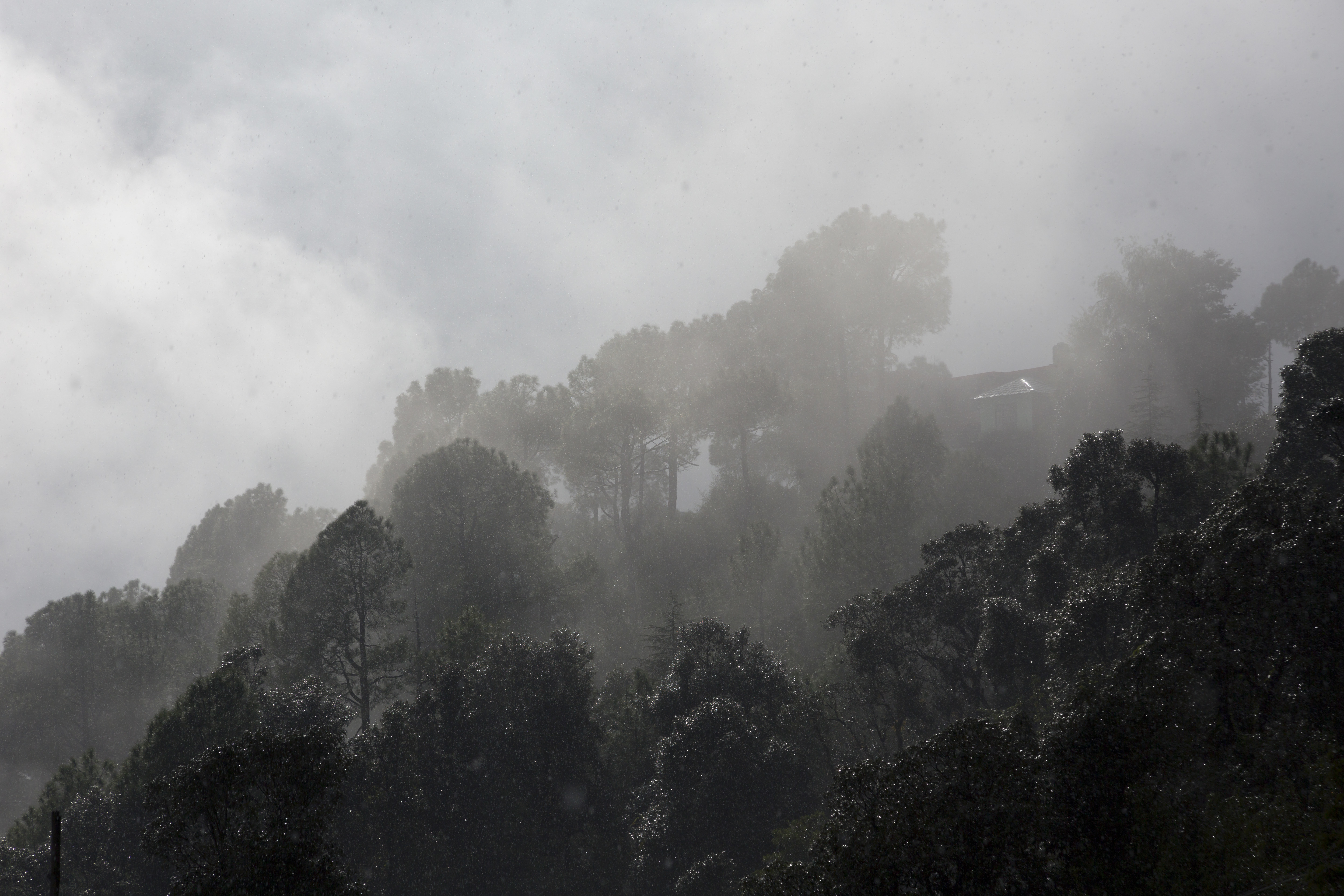 Pine trees glitter as sunlight falls on them during a heavy shower in Dharmsala, Himachal Pradesh - AP