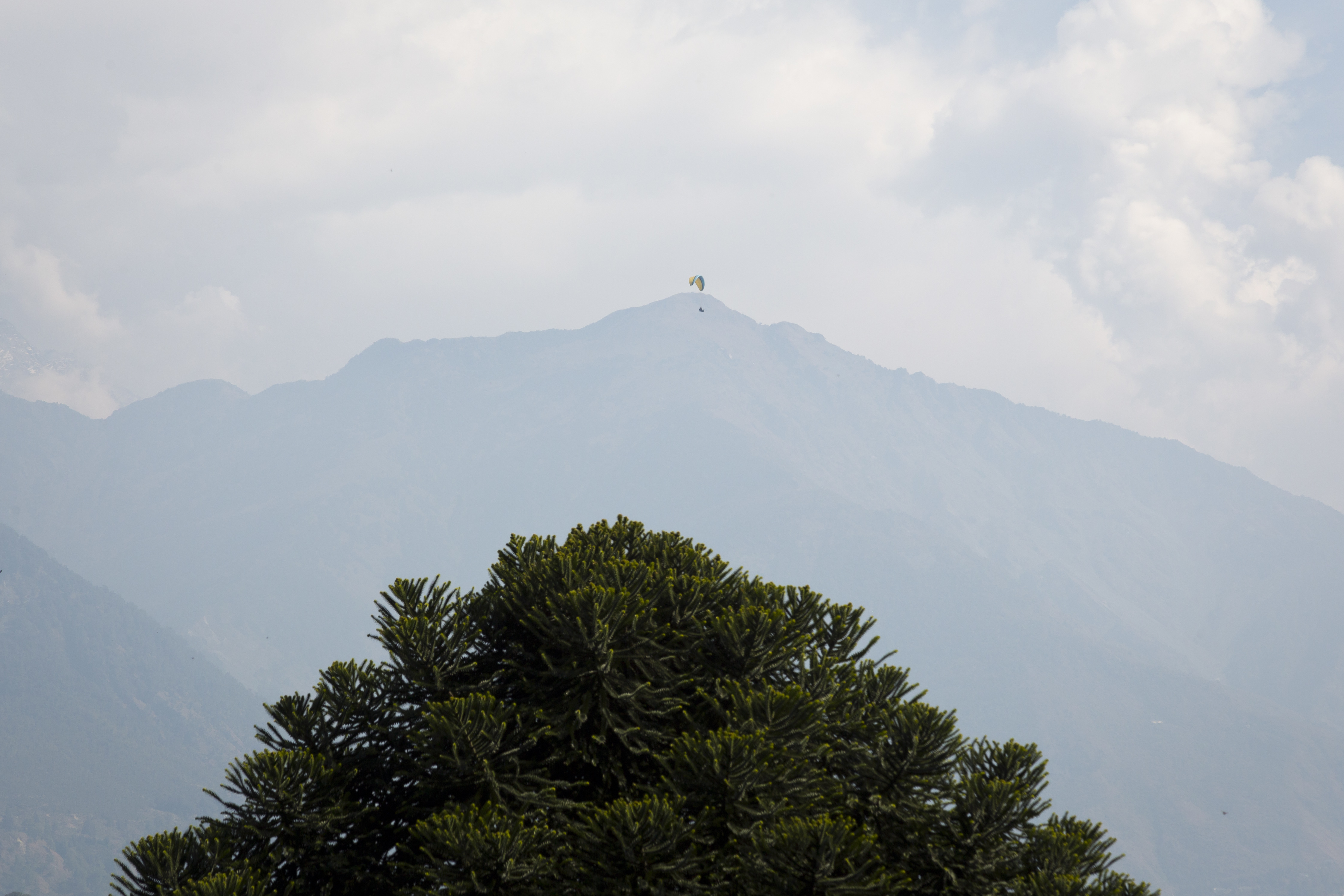 A paraglider flying against the backdrop of the Dhauladhar range of the Himalaya is seen from Dharmsala - AP