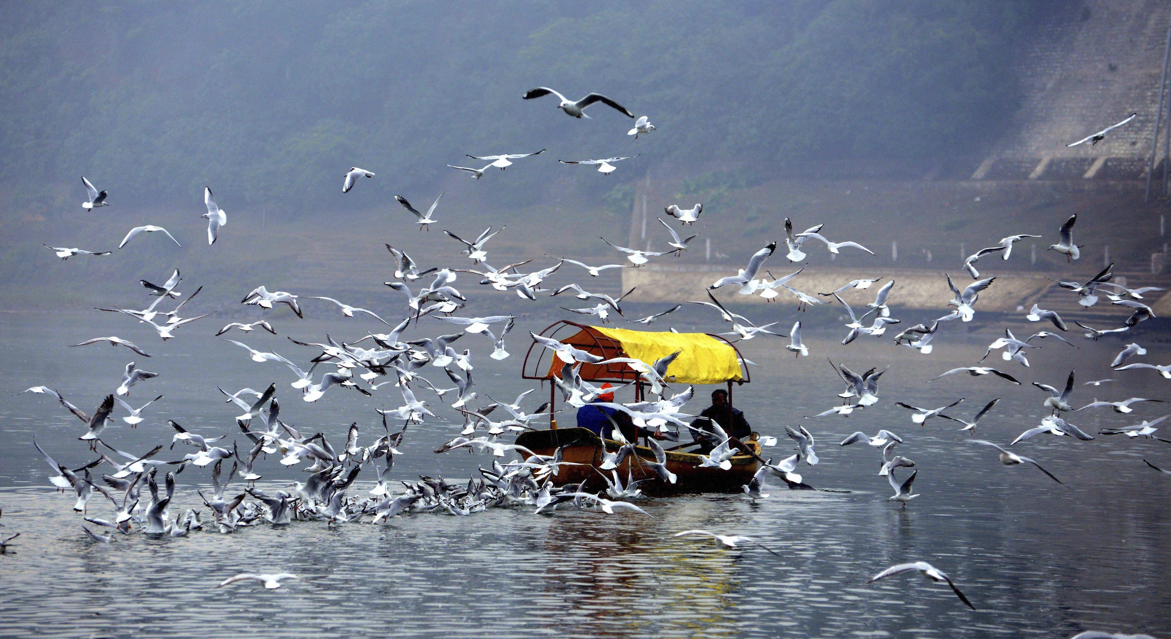 Birds frequenting the River Narmada as a boat carrying devotees ferries across, on a picturesque morning, in Jabalpur - PTI