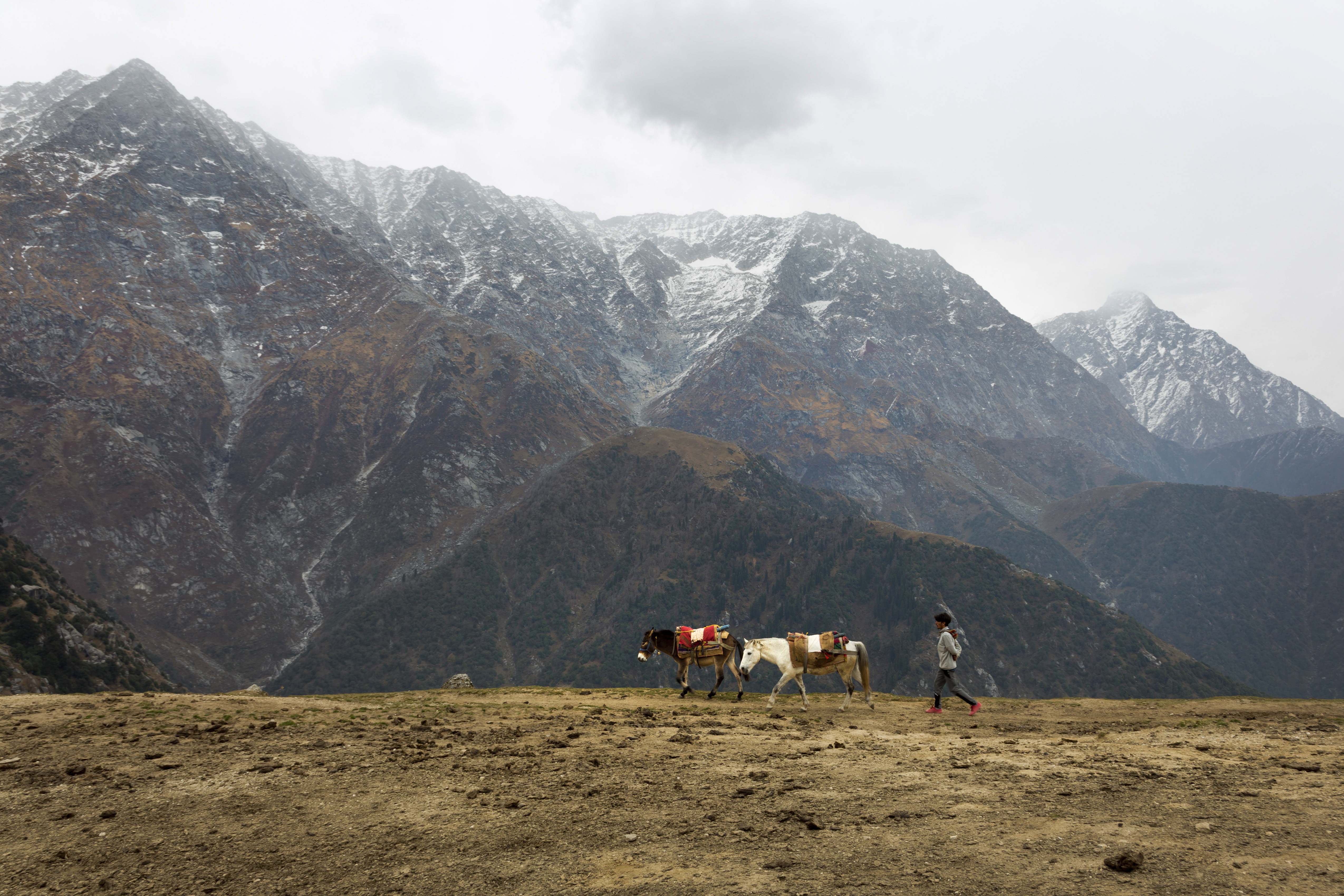 A local man drives his mules against the backdrop of the Dhauladhar range at Triund, a popular hiking destination in Dharmsala - AP