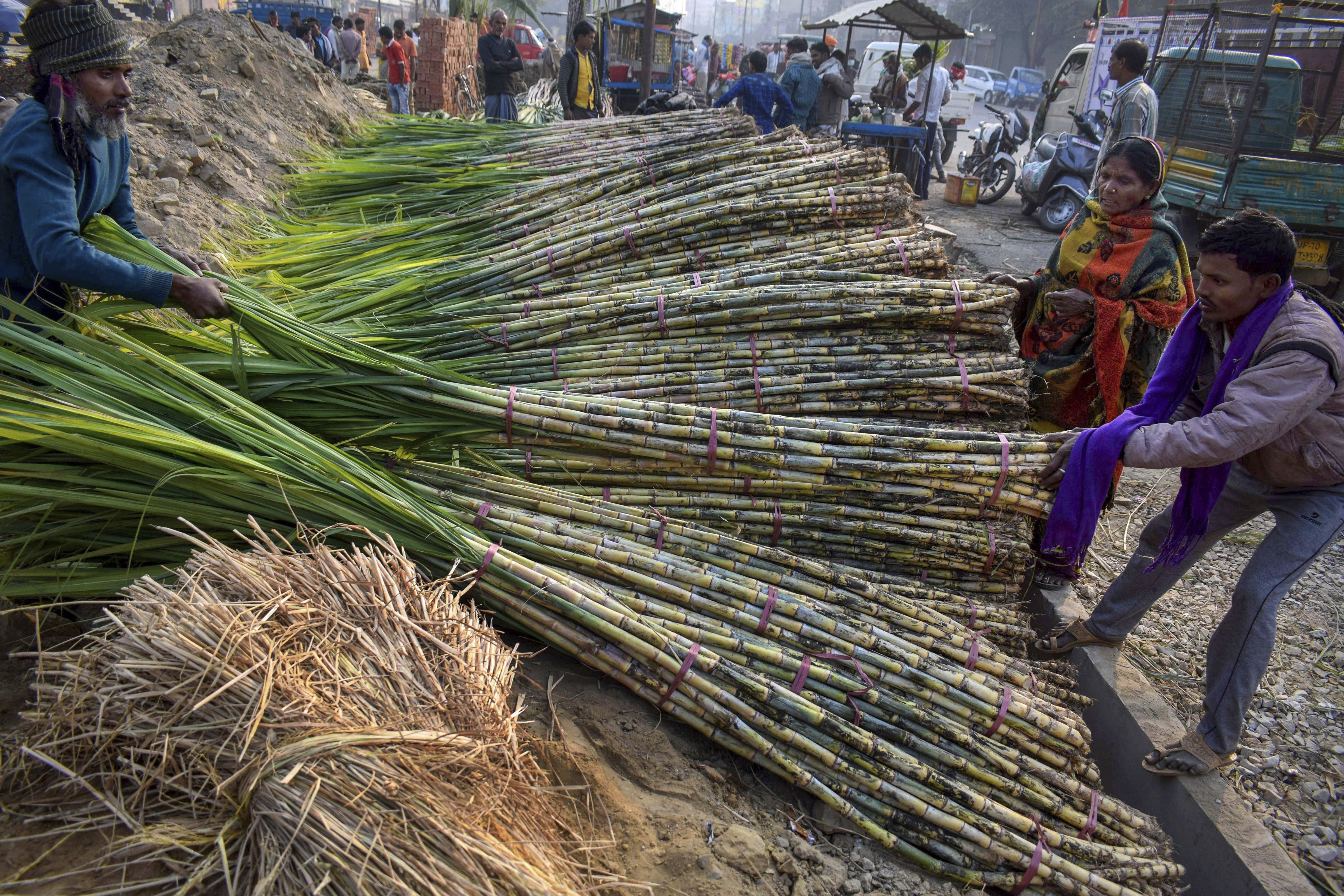 Labourers unload bunches of sugarcanes from a truck for selling during Chhath Puja festival at Mundera Mandi, in Allahabad - PTI