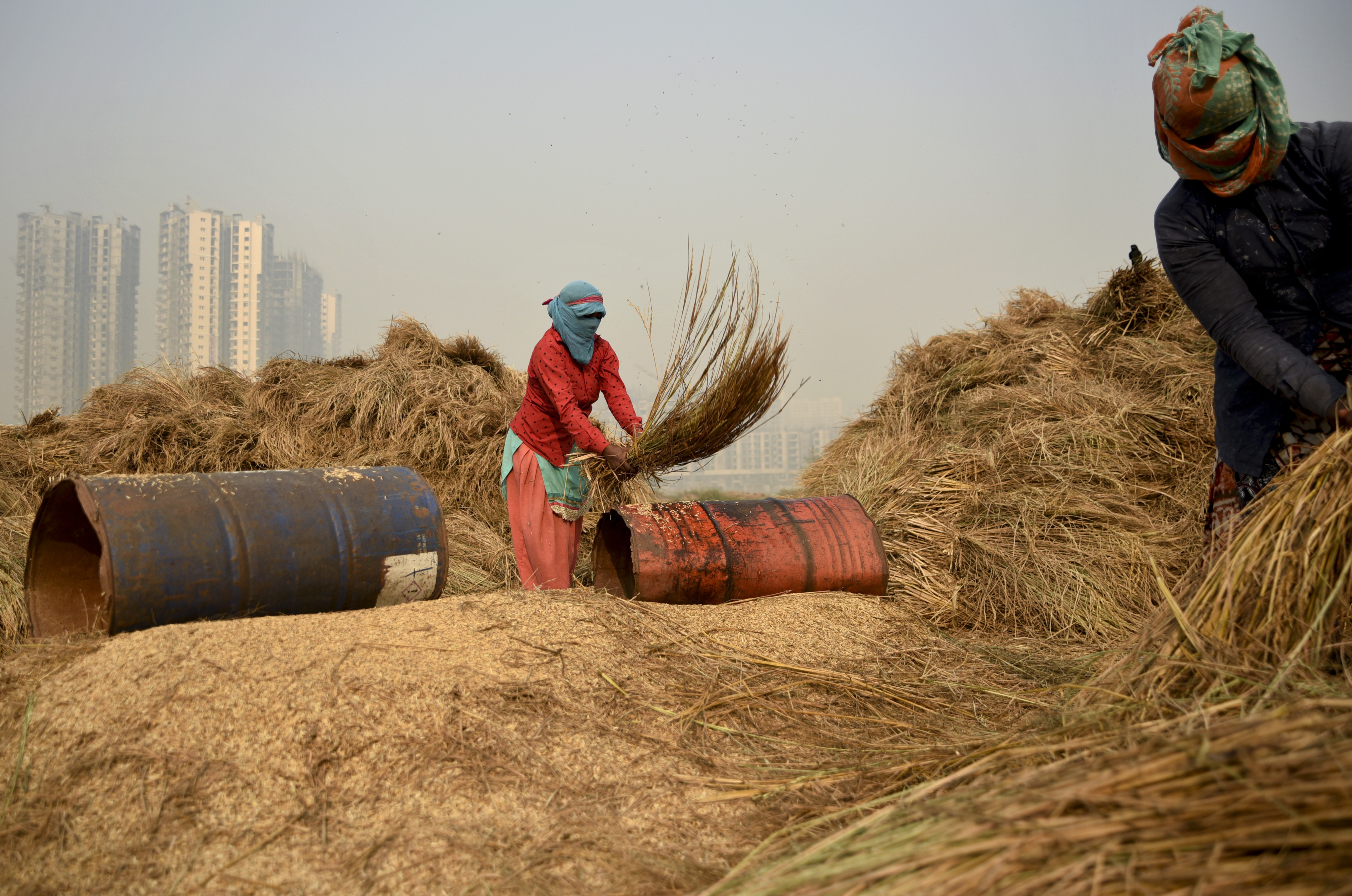 An under-construction high-rise residential building is seen behind as farm workers thrash freshly harvested paddy crop to separate the grains in Greater Noida - AP