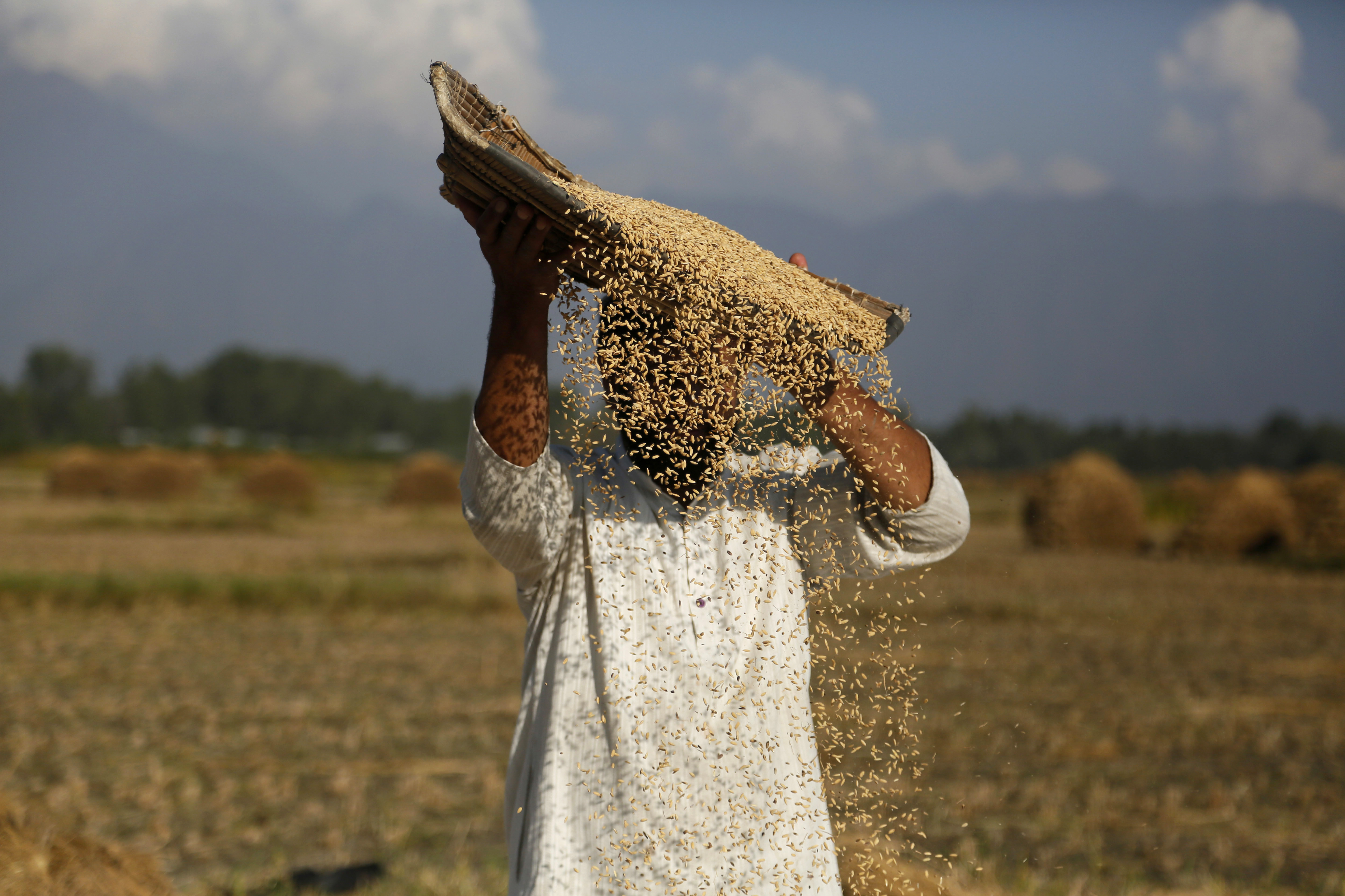 A Kashmiri farmer separates the grain from the chaff on the outskirts of Srinagar - AP