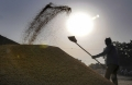 Today Photo : Worker piles up paddy grains