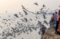 Today's Photo: Migratory birds fly over the Ganga river on a cold, foggy morning